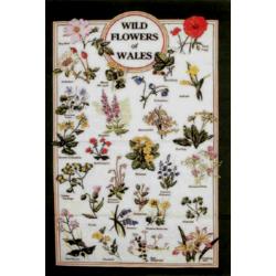Wild Flowers of Wales Tea...
